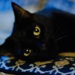 Portfolio - Animals