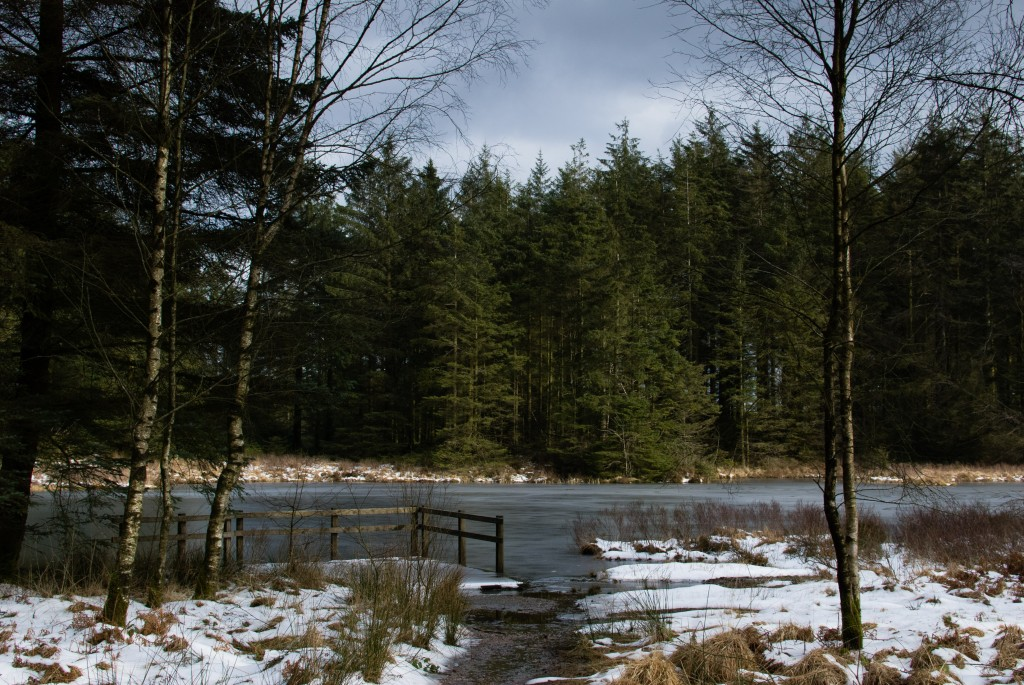 Grizedale Tarn - Winter
